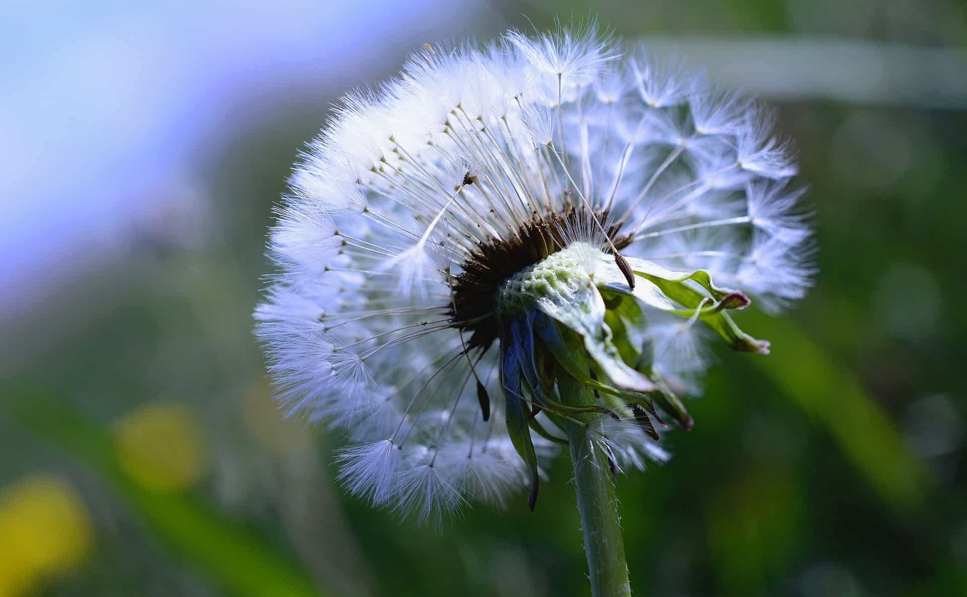 Do You Have Too Many Weeds In Your Grass?